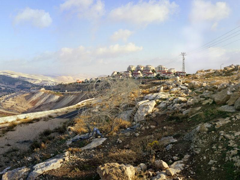 LDAzarya Palestine3344