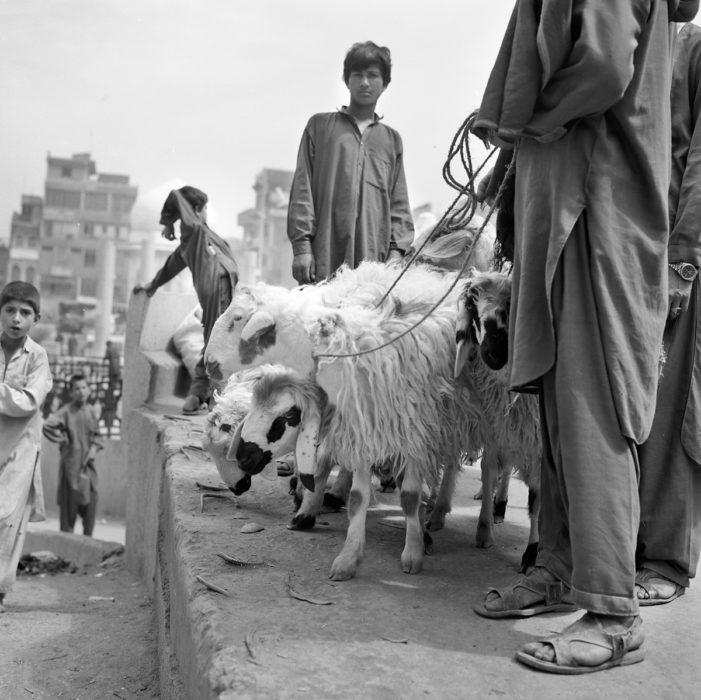 LD-Peshawa 1996-10030